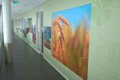 folie-muur-rotterdam_002